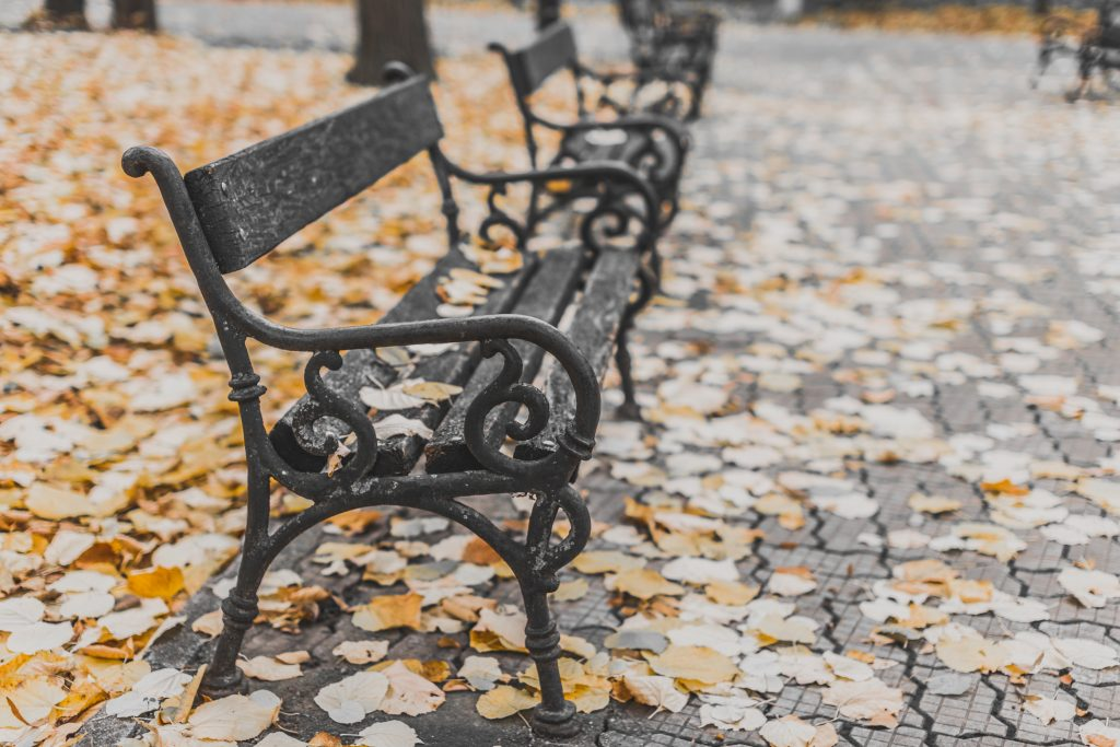 A park bench in the Fall with leaves surrounding it