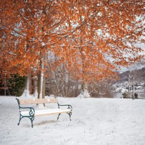 A snow-covered bench in a park